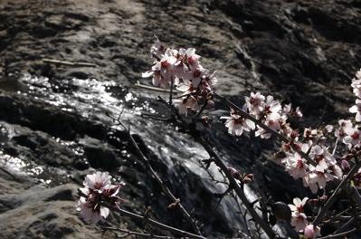 Wasserfall mit Mandelblüten