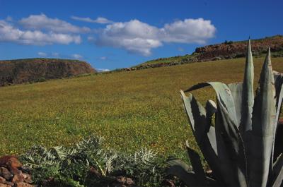Blumenwiese im Norden von Gran Canaria